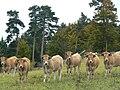 France Lozère Aubrac 05.jpg