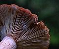 Fungi - 1 (2769684617).jpg