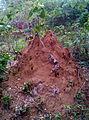 GKN Snake Termite nest DSC 1118.JPG