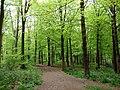GOC Tring & Wendover Woods 036 Wendover Woods, Halton (33947207743).jpg