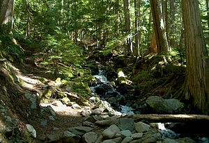 British Columbia Mainland Coastal Forests (WWF ecoregion) - Forest on Mount Garibaldi
