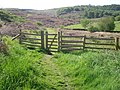Gate marking the start of a walk - geograph.org.uk - 1358572.jpg