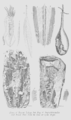 Geology and Mineralogy considered with reference to Natural Theology, plate 28.png