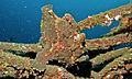 Giant Frogfish (Antennarius commerson) (6061923762).jpg