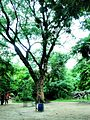 Giant trees.jpg
