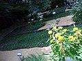 Giardino botanico di Brera (Milan 34.jpg