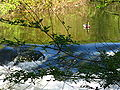 Glatt - Kanal - Wallisellen IMG 6809.JPG