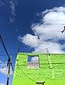 Golondrinas (Hirundo rustica) en el cableado eléctrico - Dolores Hidalgo, México.jpg