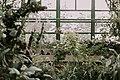 Gradina Botanica, Bucharest (Unsplash NgiE1A-lIyY).jpg