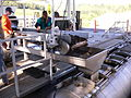 Grapes sorting and crushing with winemaking equipment.jpg