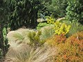 Grasses in the Winter Garden at Rosemoor - geograph.org.uk - 932964.jpg