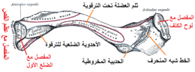 Gray201 Arabic YM.png