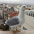 Great city with bird.jpg