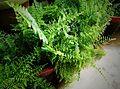 Green Garden Plants by Sankar.jpg