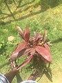 Green Grass with flower 004.jpg
