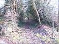 Grey cat and bridleway - geograph.org.uk - 333278.jpg