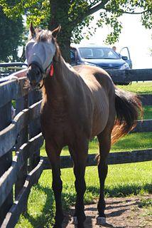 Gulch (horse) American-bred Thoroughbred racehorse