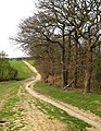 Gusted Hall Woods - Winter - geograph.org.uk - 671567.jpg