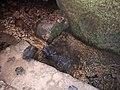 Gutmanala Grotte und Quelle.jpg