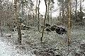 Hövelhofer Wald - Sturmschäden - 2.jpg