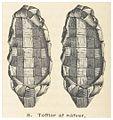 HAZELIUS(1881) Vol.1, Abb.8, p036.jpg