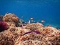 Habitat Nemo.jpg