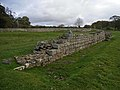 Hadrian's Wall at Planetrees - geograph.org.uk - 1023541.jpg