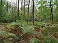 Hambach forest 13.jpg