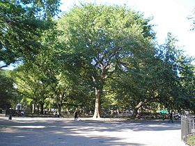 Image illustrative de l'article Tompkins Square Park