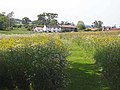 Hay meadow at Headlam - geograph.org.uk - 1339318.jpg