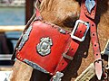 Head of carriage horse in Chania, Creta 13.jpg