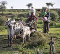 Heading Home, Ethiopia (11870466644).jpg