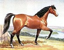 Pintura de um cavalo de cor vermelha com crina preta e cauda empinada
