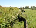 Hedge, ditch and fence, northwest of Broadwell - geograph.org.uk - 1317856.jpg