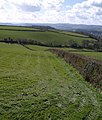 Hedge by the bridleway - geograph.org.uk - 750753.jpg