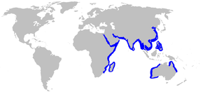 Description de l'image Hemipristis_elongatus_distmap.png.