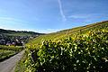 Herbstlicher Spaziergang durch die Becksteiner Weingärten. 08.jpg