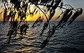 Heron Island 15.jpg