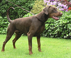 Kennel Guard Natural Dog Flea Treatment