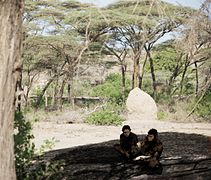 Homo erectus hand axe Daka Ethiopia