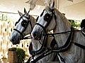 Horse drawn hearse horses City of London Cemetery 6.jpg