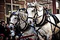 Horses-1501805 1920.jpg