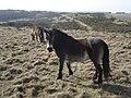 Horses on Lullington Heath - geograph.org.uk - 1204532.jpg