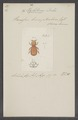 Hylotorus - Print - Iconographia Zoologica - Special Collections University of Amsterdam - UBAINV0274 015 12 0009.tif