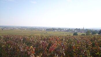 IMG Vignoble de Meursault.JPG