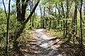 Ichetucknee Springs State Park Blue Hole Trail 4.jpg