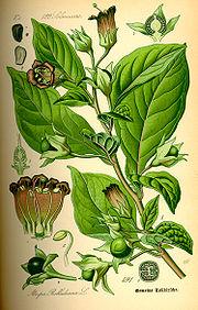 beruhigungsmittel pflanzlich schnell wirkend