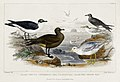 Illustration from A History of the Earth and Animated Nature by Oliver Goldsmith from rawpixel's own original edition of the publication 00064.jpg