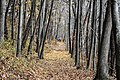Indiana Dunes National Park (53224990-f633-4e36-90f9-dc15cabdcd7d).jpg