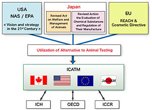 Alternatives to animal testing - Image: International Cooperation on Alternative Test Methods (ICATM)